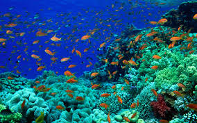 fishes oceans animals fishes seas underwater animated fish