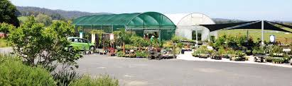 gondwana wholesale native plant nursery australia riverside nursery u2013 14 taronga crescent bega t 02 64924151 a