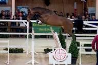 www.belgian-warmblood.com/cdn/uploads/paarden/056-...