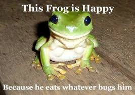 Funny Frog Meme - lawlz laugh out loud on this humor site with funny pictures and