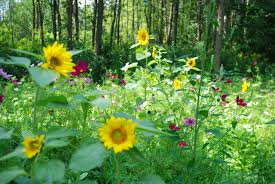 How To Do Landscaping by Garden Design Garden Design With Wildflower Garden Bursts Into