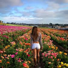 san diego flowers the flower fields at carlsbad ranch san diego ca sun kissed hiker