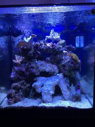 Aquascapes Of Ct Tips And Tricks On Creating Amazing Aquascapes Page 33 Reef