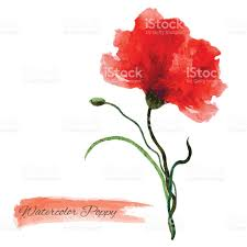 Background Images For Wedding Invitation Cards Poppy Red Flower Watercolor Illustration Isolated On White