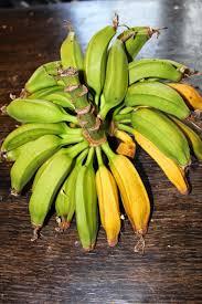 Tiny Banana Edible Tropicals How To Propagate Bananas