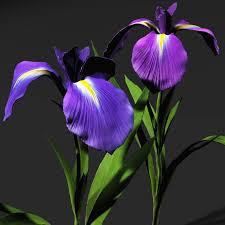 iris flowers 3d iris flowers 3d models bijan studio