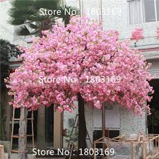 10 pcs weeping cherry tree diy home garden tree