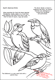 coloring books butterflies and birds giant tablet