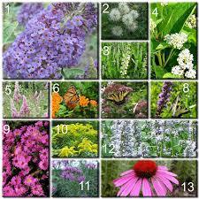 butterfly garden plants butterfly plants list butterfly flowers