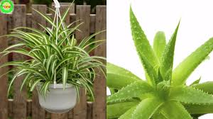 Air Purifying Plants 9 Air by Nasa Recommends Having These Plants In Your House To Purify The