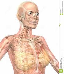 Human Anatomy Diagram Download Human Anatomy System Human Anatomy For Reproductive Inner Body