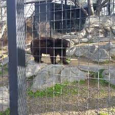 folsom zoo christmas lights 2017 the folsom city zoo sanctuary 394 photos 163 reviews zoos