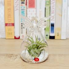 hanging glass angel air plant terrarium by dingading terrariums