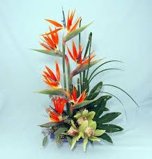birds of paradise flowers paradise blooms kremp