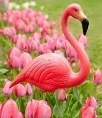 happy pink flamingo day