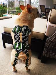 canine kinesiology taping online course holistic animal courses