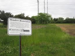 native plant restoration plant the city green gatineau hydro corridor tallgrass prairie