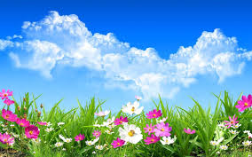 spring flowers reuun com