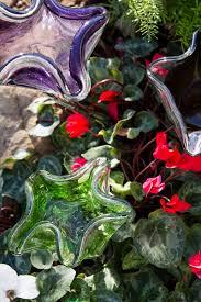 native oklahoma plants new u0026 improved u2013 cleveland county lifestyle magazine