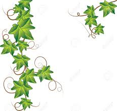 green ivy royalty free cliparts vectors and stock illustration
