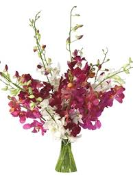 bulk flowers online wholesale bulk discount cut dendrobium orchid assorted