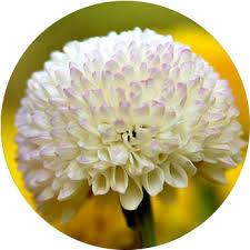 white flower 48 types of white flowers proflowers