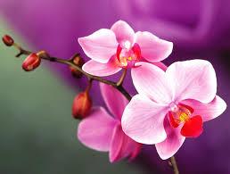 Orchids Facts by Orchid Cat Friendly Plants Arrangement Ideas For Inspiration