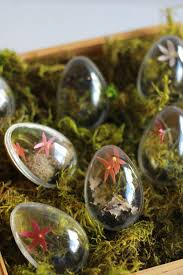 how to make easter egg terrariums the house that lars built