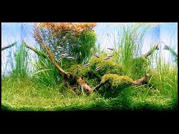 Aquarium Aquascapes Aquatic Eden Aquascaping Aquarium Blog