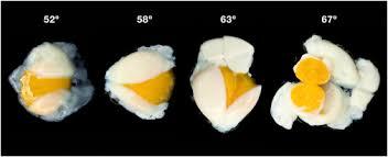molecular cuisine biophysics of molecular gastronomy cell