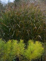 recon native plants garden memoir archives the obsessive neurotic gardener
