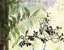 home decoration with plants blog u2013 diana valentine home design