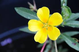 native pond plants wwt national wwt news