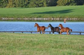 Kentucky wildlife tours images Horse farm tours in lexington ky blue grass tours jpg