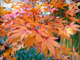 it u0027s not work it u0027s gardening some autumn color