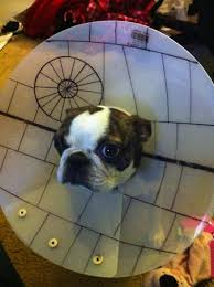 Star Wars Dog Halloween Costumes 10 Pet Parents Cone Shame
