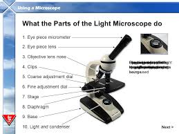 what is a light microscope used for in this presentation you will ppt video online download