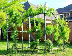 build a grape arbor design decoration