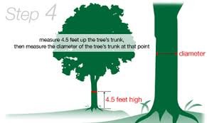about our tree removal cost calculator stl st louis jefferson