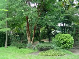 planting privacy garden housecalls