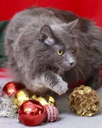 479 best fun holiday cats christmas cats images on pinterest