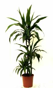 Indoor House Plant Pleasing 90 Tropical House Plant Types Decorating Design Of