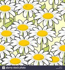chamomile seamless pattern beautiful flowers ornament summer