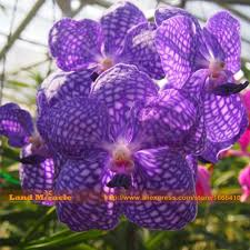 online buy wholesale moth orchid seed from china moth orchid seed