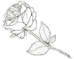 rose sketch by iluvobiwan91 on deviantart