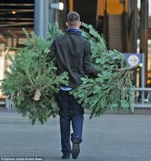 How Much Are Real Christmas Trees - now that u0027s an austerity christmas tree ikea slashes price of