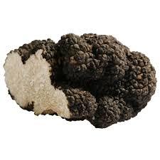 where to buy truffles online summer truffles buy online london uk