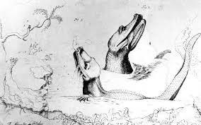 file william bartram sketch of alligators on the st johns river
