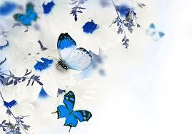 Blue Flower Backgrounds - flower butterflies floral blue flowers flower wallpaper hd