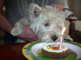 birthday cake for dogs just dogs online shop